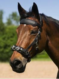 Недоуздок Norton (Нортон) для коня з нікельованими пряжками по вигідній ціні Фото