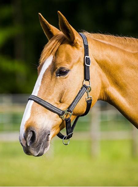 Якісний недоуздок для коня зі стразами Нортон Фото