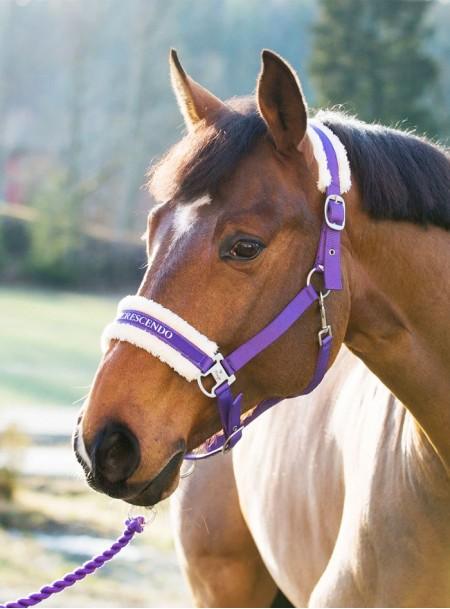 Недоуздок для коня Howard Фото