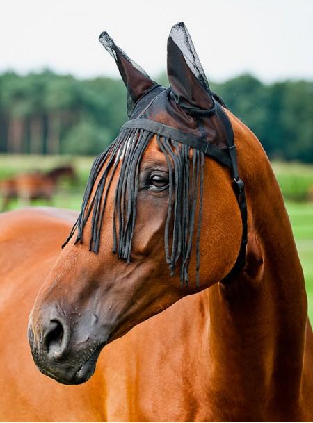 Захисні вушка для коня з налобником від комах Horze Фото
