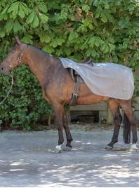 Захисна попона на задню частину коня