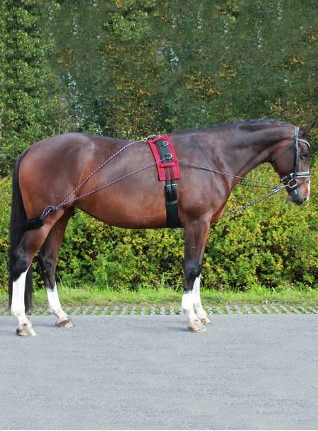 Універсальний кермовий ремінь (шлея) для коня від фірми QHP Фото