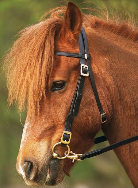 Якість і ціна вуздечки для коня Нортон Фото