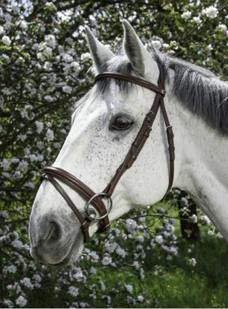 Вуздечка для коня Norton (НОРТОН) зі сталевими пряжками Фото
