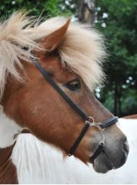 Универсальный капсюль восьмерка для лошади ERIC THOMAS PRO из качественных материалов  Фото
