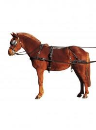 Упряж для коня APOLLO 810066 в розмірі Cob для щоденних верхових прогулянок Фото