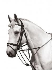Повнорозмірний гог для упряжі коня з 100% шкіри та нержавіючої сталі від фірми NORTON Фото